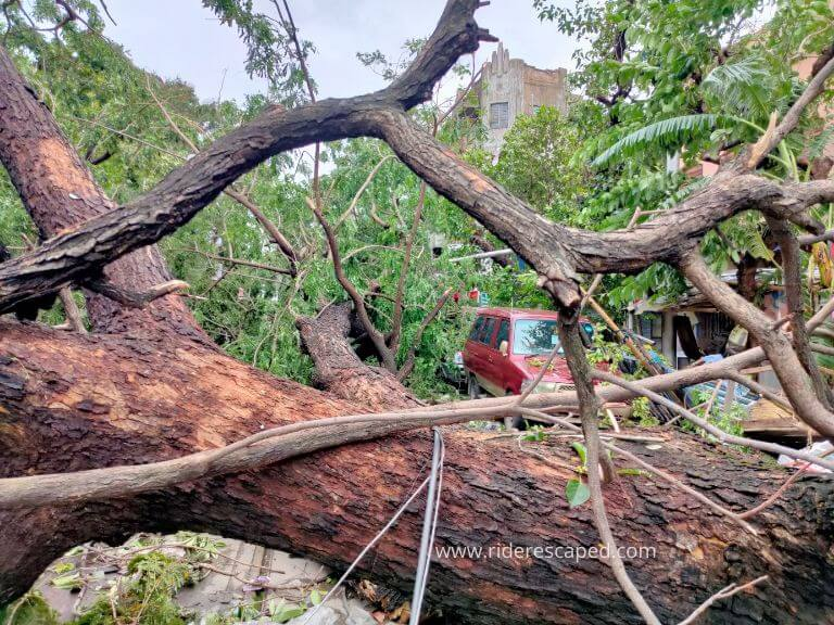 Amphan Cyclone effect, road block for uprooted tree, 21st May 2020