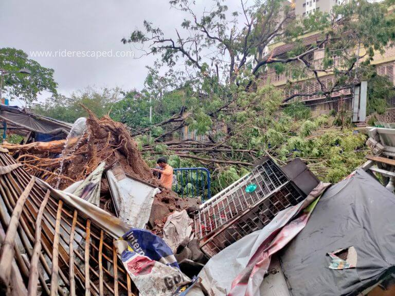 Amphan Cyclone effect, tree uprooted in Bidhan Sarani, 21st May 2020